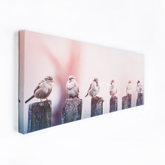 Early Morning Tweets Printed Canvas Wall Art, , large