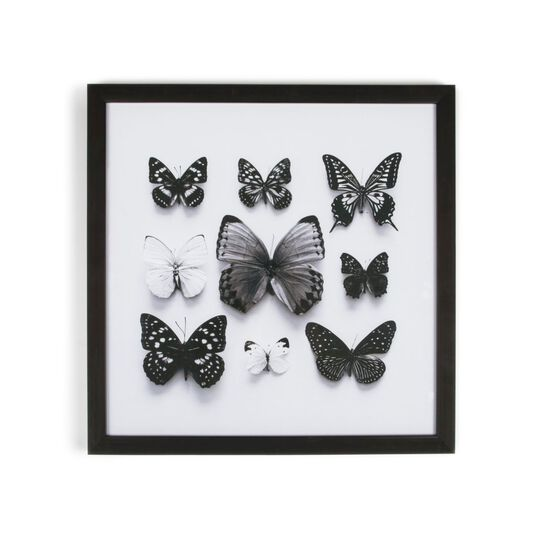 Butterfly Studies Framed Print | Butterfly Wall Decor