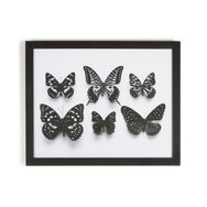 Botanical Butterflies Framed Wall Art Print, , large