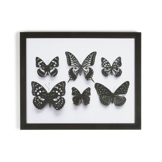 Botanical Butterflies Framed Wall Art Print - GrahamBrownAU