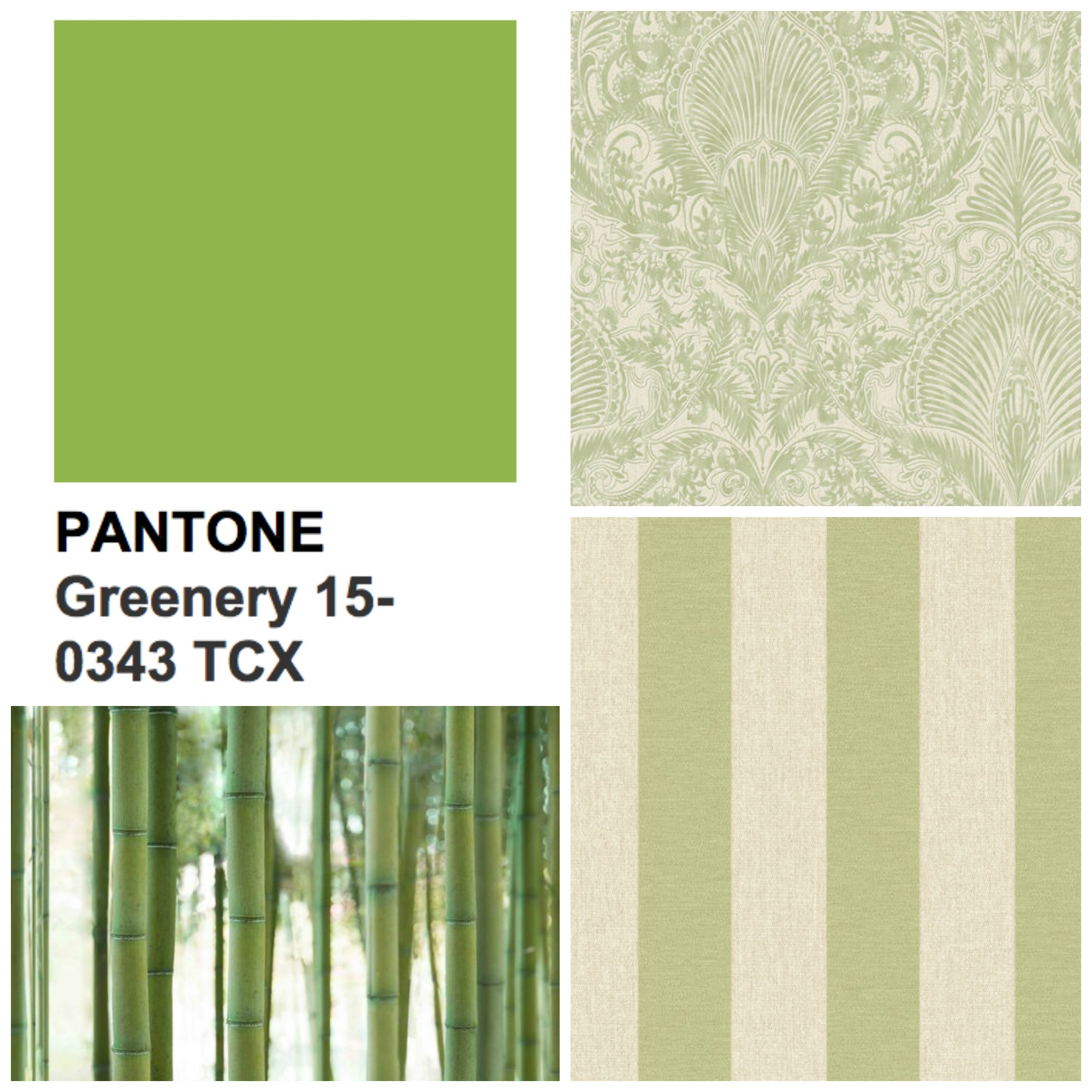 Our Green Wallpaper Collection Includes Botanical Inspired Prints Like Bambou Forest Styles As Well Adding A Zesty Twist On Classic